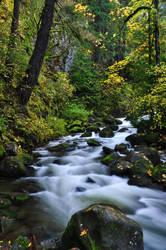 Multnomah Creek, Fall Study 2016 by greglief