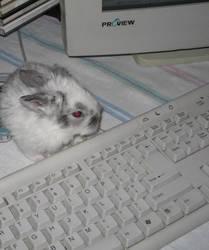 IT bunny by deviantBOO