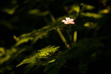 Hidden Beauty by lightisthelimit