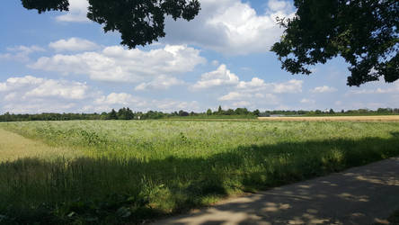 Sunny meadow by Riyumi-san