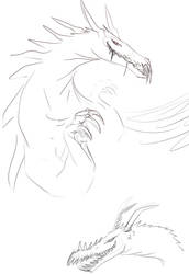 Draconic Sketches by NullAndArt