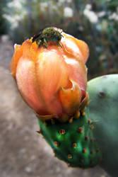 Humming Bird Bee by curtydc