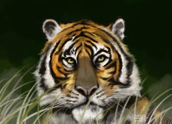 Tiger by AliciaTapia