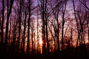 Beauty's Forest - Stock by Thy-Darkest-Hour