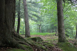 Forest Stock 02 by Thy-Darkest-Hour