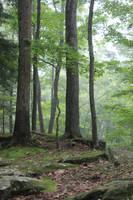 Forest Stock 11 by Thy-Darkest-Hour