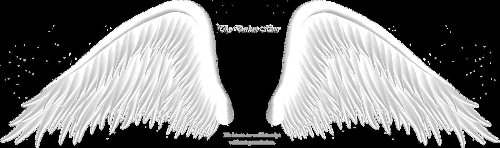 Elegant White Wing PNG by Thy-Darkest-Hour