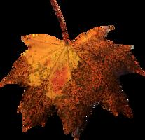 Leaf PNG 04 by Thy-Darkest-Hour