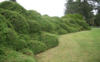 Manicured Lawn by Thy-Darkest-Hour