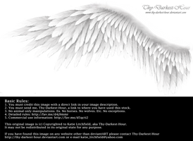 Winged Perfection - White by Thy-Darkest-Hour