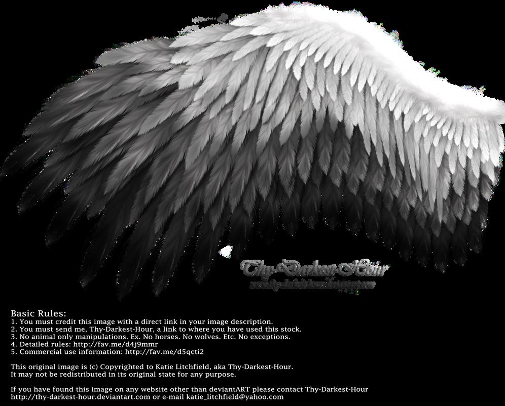 Romantic Wing - White-Black by Thy-Darkest-Hour