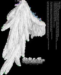 Draped Wing - White by Thy-Darkest-Hour