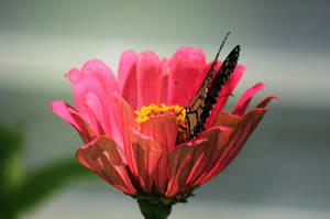 Flowering 01 by Thy-Darkest-Hour