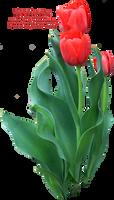 Tulip Greenery PNG by Thy-Darkest-Hour