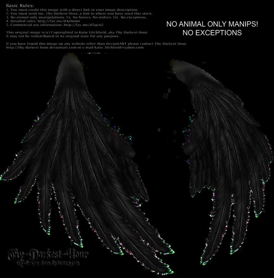 Enchantress Wings -Black by Thy-Darkest-Hour