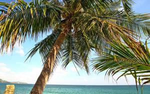 Palm Tree 2560 by myINQI