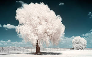 White Trees Part III by myINQI
