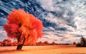 Infrared Trees - pt. I by myINQI