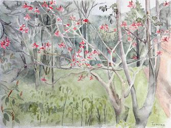 Mulungu florido by tamino