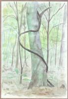 tree and liana by tamino
