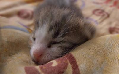 Sleepy kitty by Alaarips