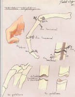 Anatomy 101 by Norbert2009