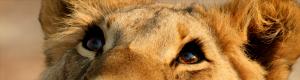 Liowa's Profile Picture
