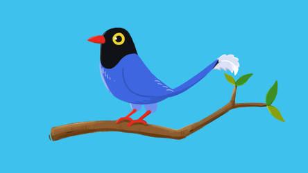 Taiwan blue magpie by RichardTW