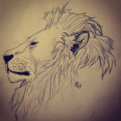 Lion study by LaChasseresse