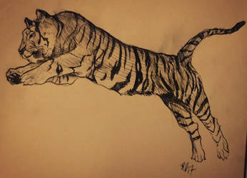 Tiger study by LaChasseresse