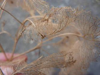 Looks like tumbleweed by polarbearcow