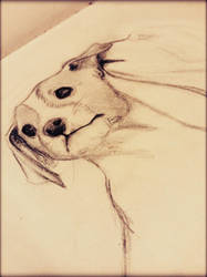 Dog by RiseRedMoon