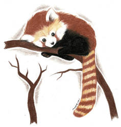 Red Panda by Rimfrost