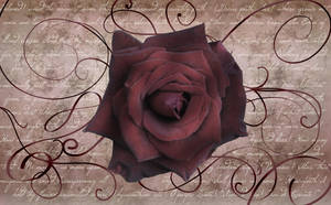 Antique Rose Wallpaper by silverperfume