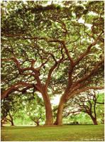 l'arbre by niimo