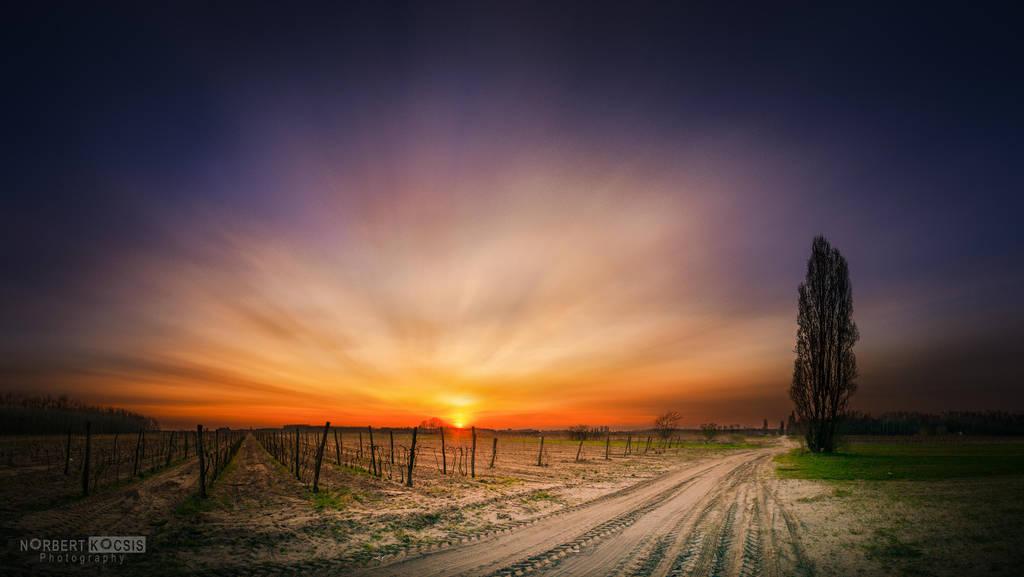 Sunset sheen by NorbertKocsis