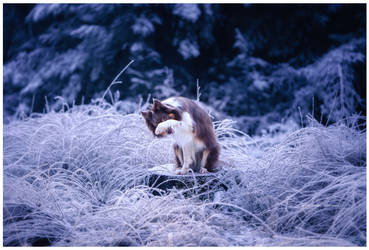frozen by corniger-aries