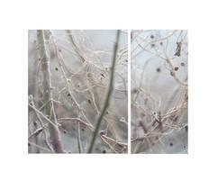 winterly by yariire