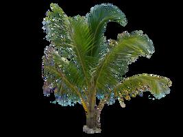 Palm Tree Tube Stock III PNG by digitaltwist