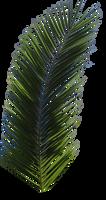 Palm Tree Tube Stock VI PNG by digitaltwist