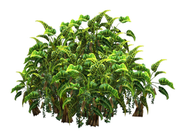 Tropical Plant stock tube PNG by digitaltwist