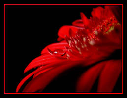 Red..... by Pjharps
