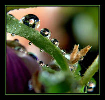 Water Drops.... by Pjharps