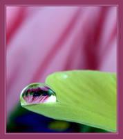 ..::Balancing::.. by Pjharps