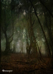 The Forest of Shadows background stock by Branawen