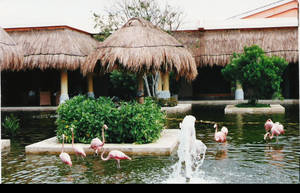 Flamingos at Paraiso del Mar by infin8yquest