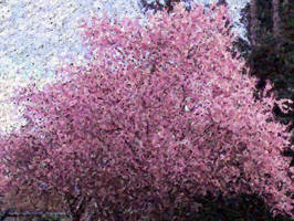 Cherry Blossom mosaic by infin8yquest