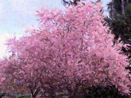 Cherry Blossom eggshell by infin8yquest