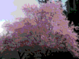 Cherry Blossom topographic by infin8yquest