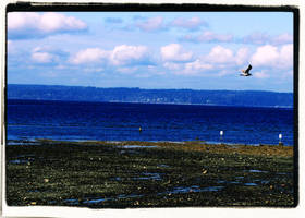 Dash Point Seagull 10 by infin8yquest